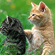 Kittens-Free-Screensaver-thumb